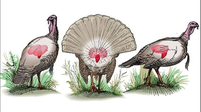 Where to shoot a turkey with a bow?